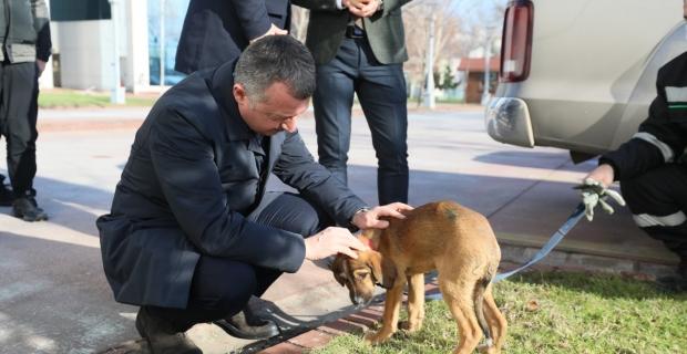 """Büyükakın; """"Hayvanlara merhamet insan olmanın gereğidir"""""""
