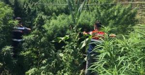 Çiftlikte uyuşturucu operasyonu