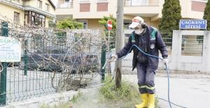 Körfez'de yabani otlara müdahale
